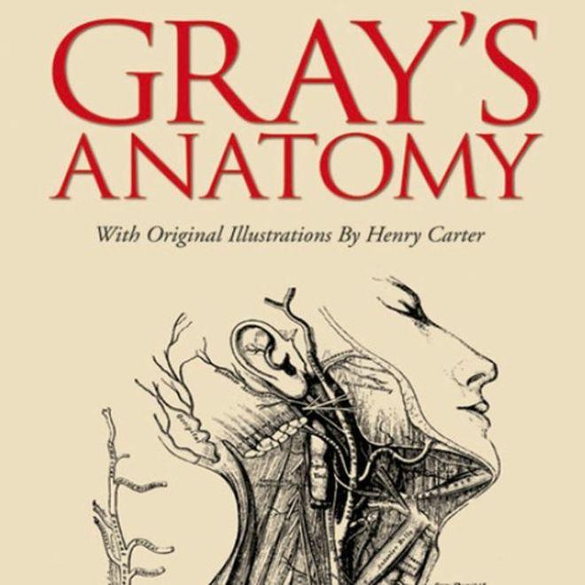 """Anatomía de Gray"""", cómo nació el libro que marcó el estudio del ..."""